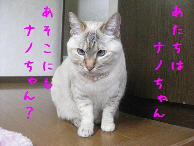 b0151748_12321571.jpg