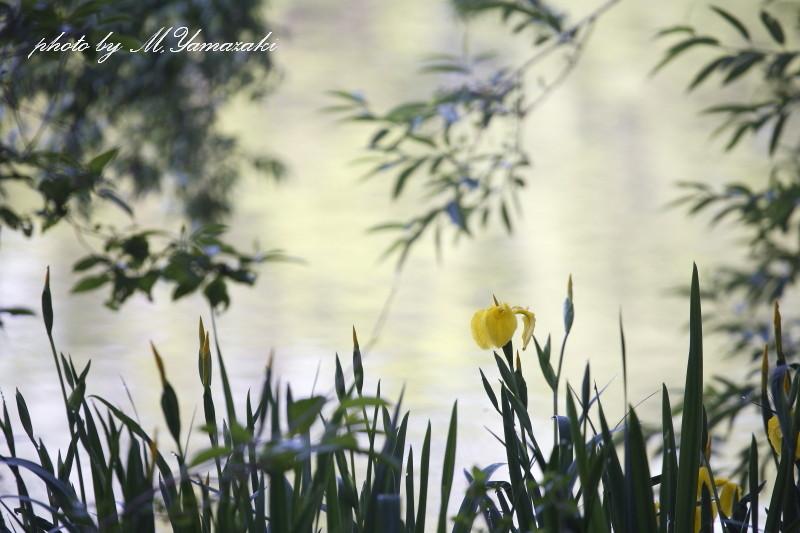 休日明けの公園_c0217255_16271487.jpg
