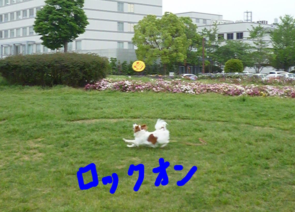 b0170863_2036165.jpg