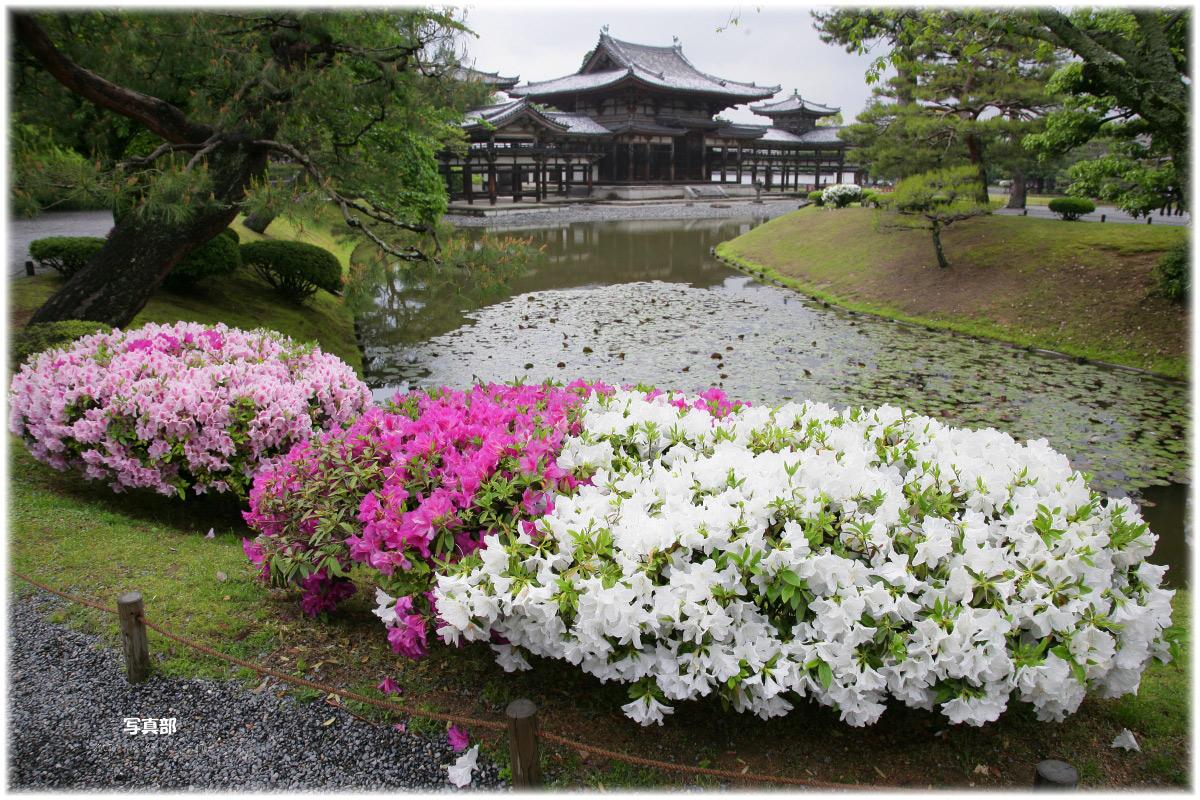 京都 宇治平等院 つつじ_f0021869_22324748.jpg
