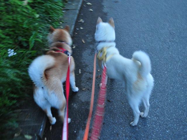 4匹で仲良くお散歩だ!_a0126590_5311154.jpg