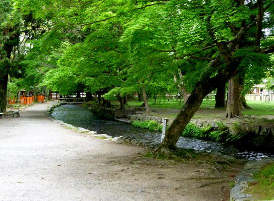 上賀茂神社 新緑_e0048413_20455842.jpg