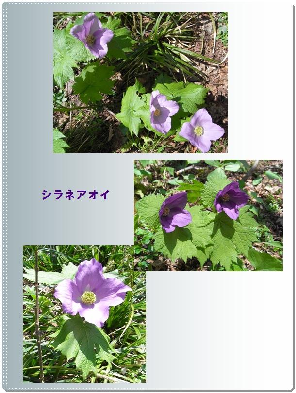 佐渡島のお花_c0073015_23594598.jpg