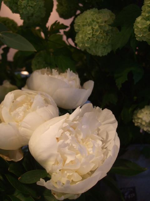 オークリーフ(十六夜薔薇)_f0049672_13234246.jpg