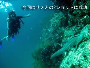 サメが戻ってきた!!_f0144385_21163466.jpg