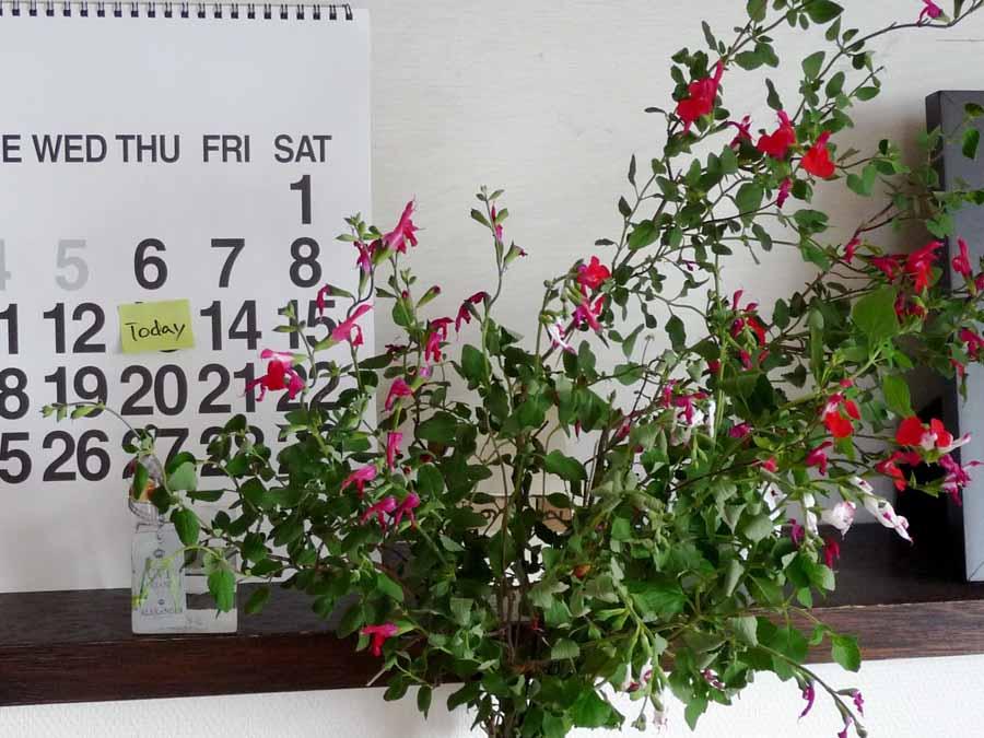 花、薫る_c0223095_9463880.jpg
