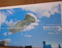 海月の「クラゲ展」_e0055098_17232927.jpg