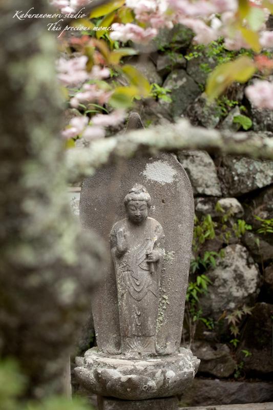 山麓の若葉、八重桜や梅、野草の花に光降り注ぐ_c0137403_19133555.jpg