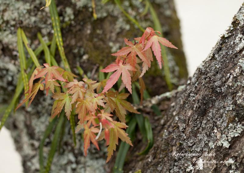 山麓の若葉、八重桜や梅、野草の花に光降り注ぐ_c0137403_19152142.jpg