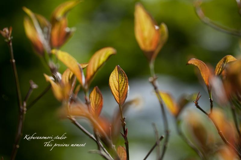 山麓の若葉、八重桜や梅、野草の花に光降り注ぐ_c0137403_19153924.jpg