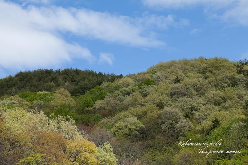 山麓の若葉、八重桜や梅、野草の花に光降り注ぐ_c0137403_1921515.jpg