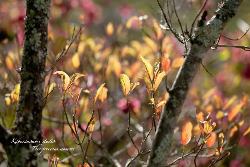 山麓の若葉、八重桜や梅、野草の花に光降り注ぐ_c0137403_1930884.jpg