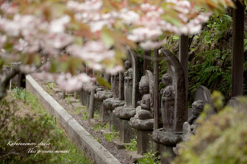 山麓の若葉、八重桜や梅、野草の花に光降り注ぐ_c0137403_1973966.jpg