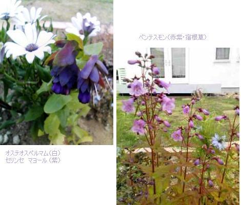 f0113108_8322481.jpg