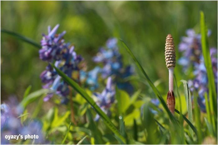 春は駆け足_a0071514_18102993.jpg