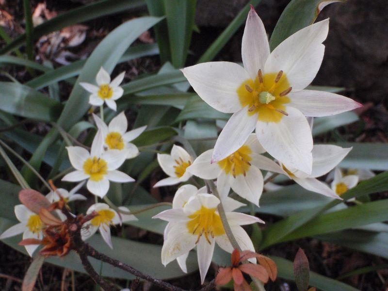 本当の春が来た_c0025115_17554422.jpg
