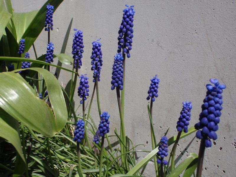 本当の春が来た_c0025115_1758974.jpg