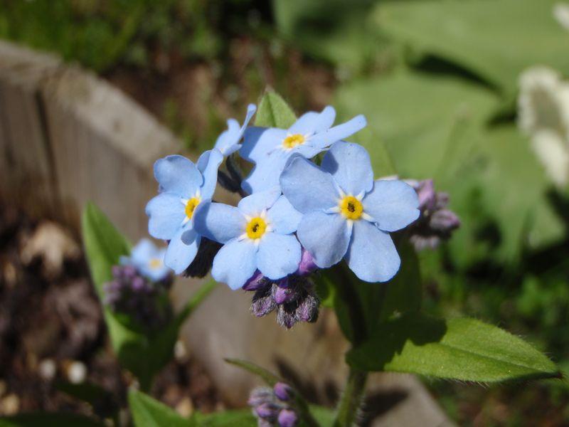 本当の春が来た_c0025115_1843737.jpg