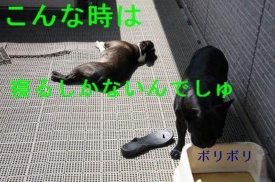 b0136826_1035038.jpg