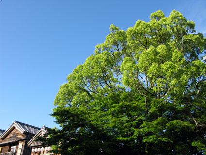 薫風_f0129726_2211887.jpg
