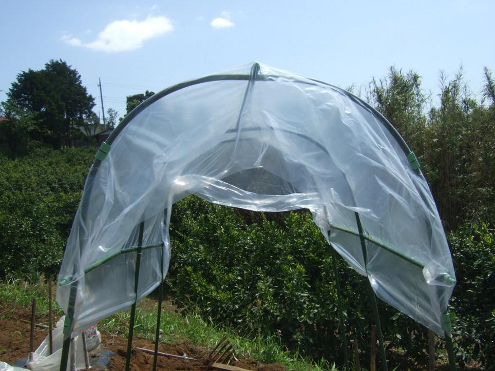 トマトの雨対策...屋根付きシート_b0137932_148565.jpg