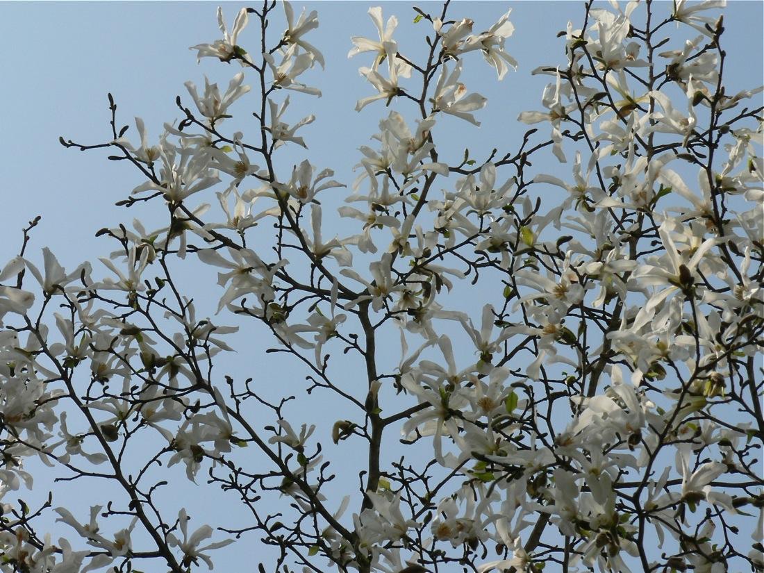 この春の爆裂大賞_d0001843_13203928.jpg