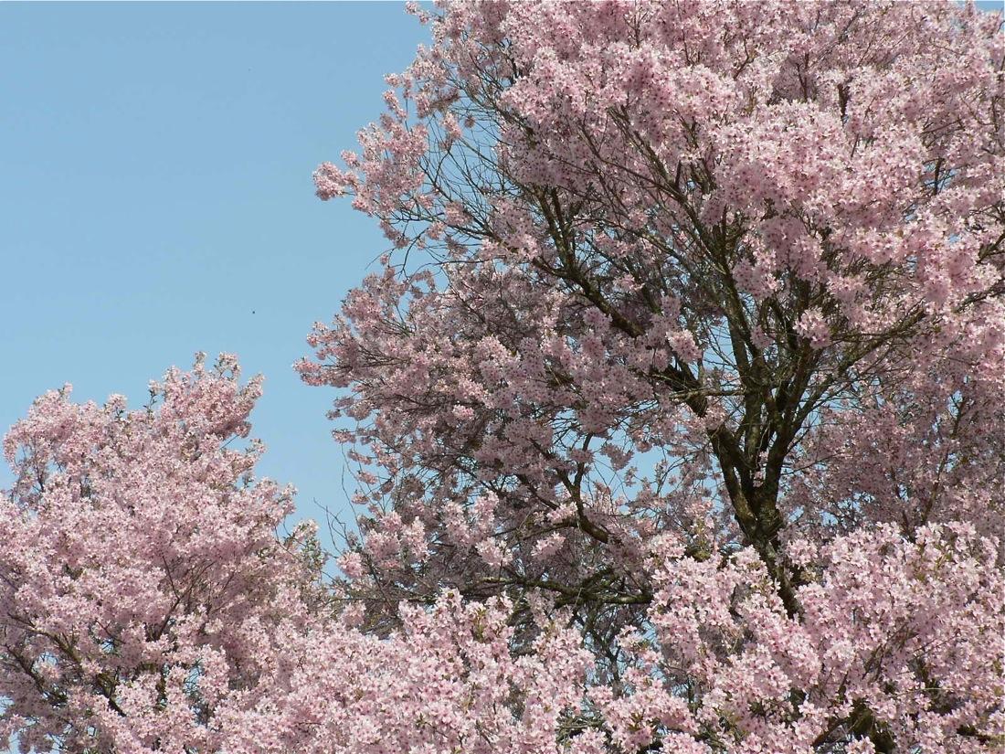 この春の爆裂大賞_d0001843_13245099.jpg