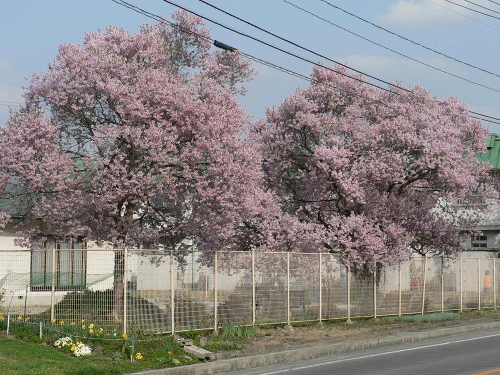 この春の爆裂大賞_d0001843_18544442.jpg