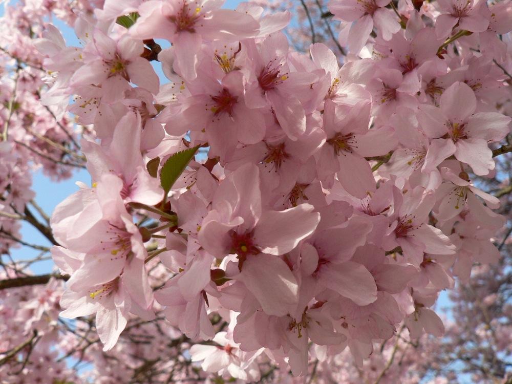 この春の爆裂大賞_d0001843_1955642.jpg