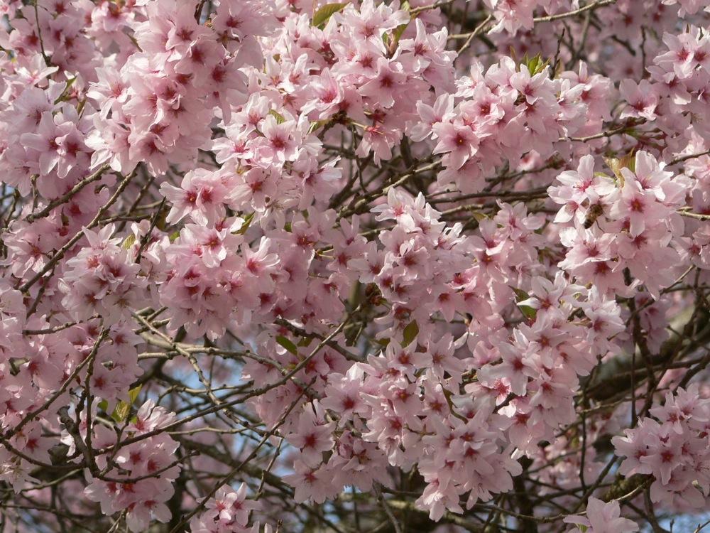 この春の爆裂大賞_d0001843_1962048.jpg