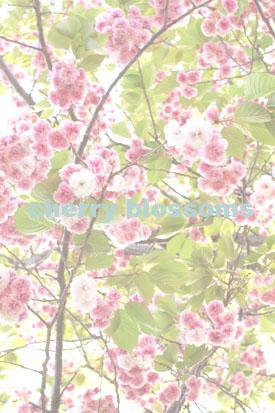 f0186156_133955.jpg