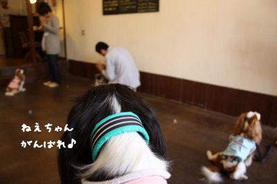 c0221462_20114763.jpg