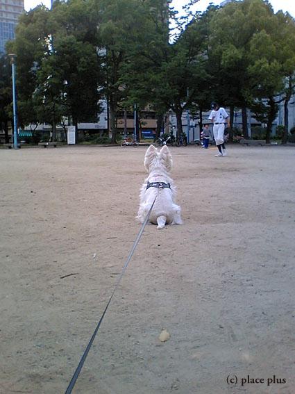 野球犬_b0107163_18525997.jpg