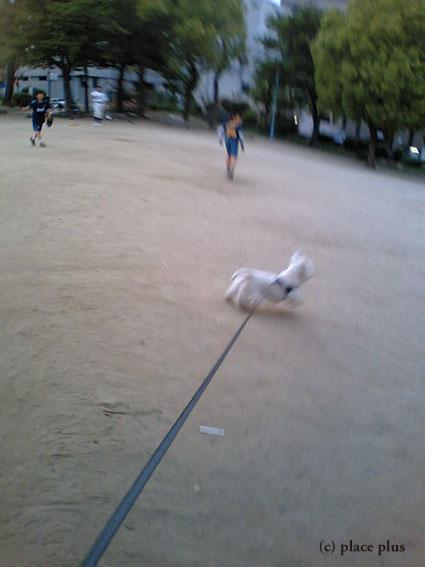 野球犬_b0107163_18531177.jpg