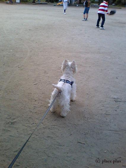 野球犬_b0107163_18532329.jpg