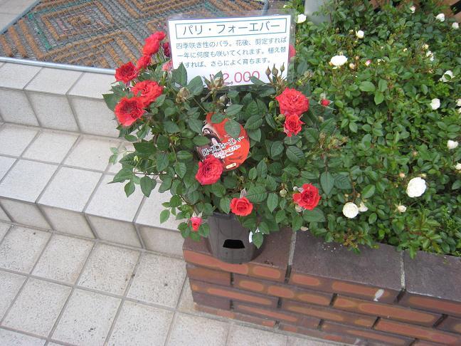 日の丸花壇_f0205367_185571.jpg