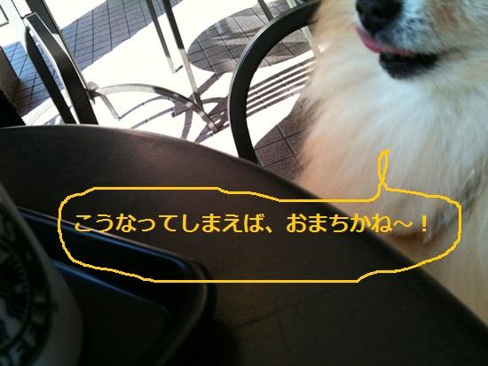 b0182968_10494783.jpg