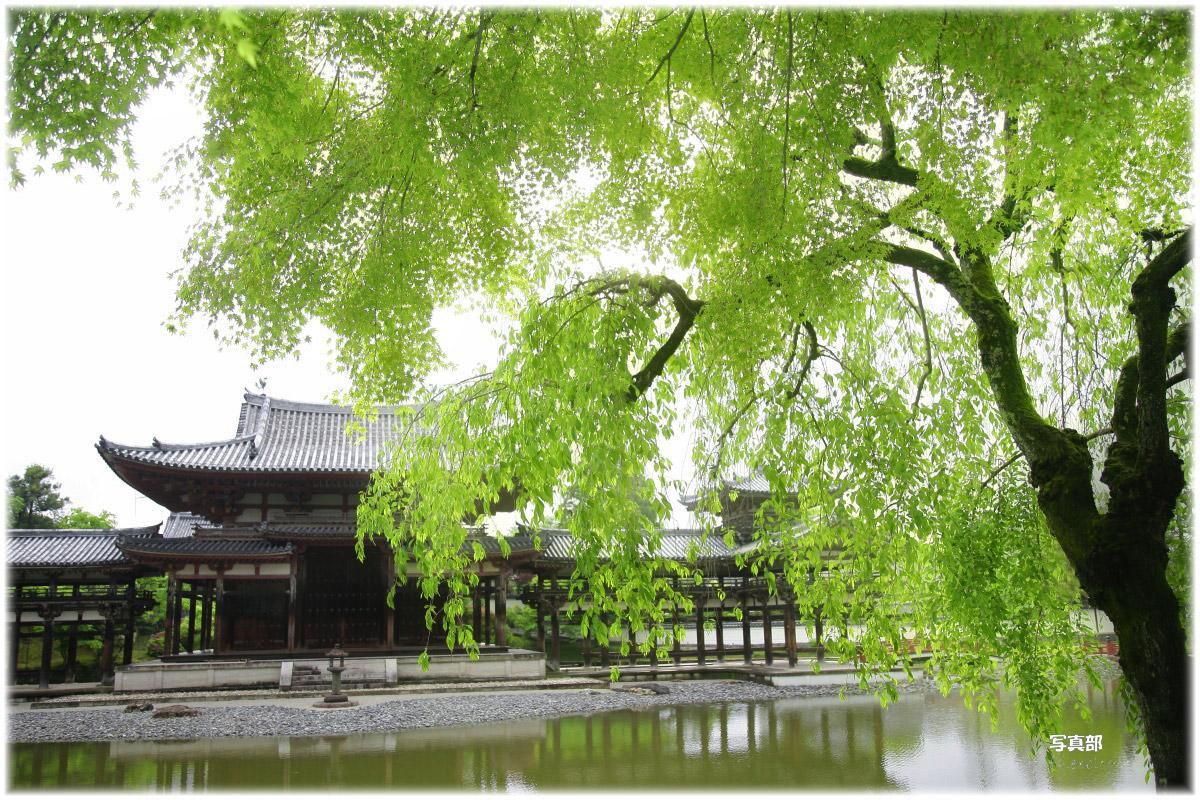 京都 宇治平等院 新緑_f0021869_21454432.jpg