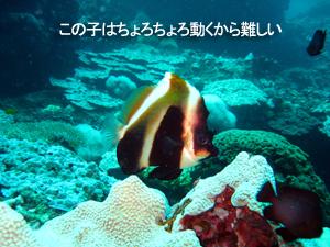 最終日はピピ島♪_f0144385_2227594.jpg