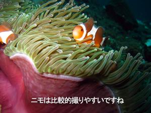 最終日はピピ島♪_f0144385_22291151.jpg