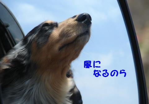 f0195891_2044232.jpg