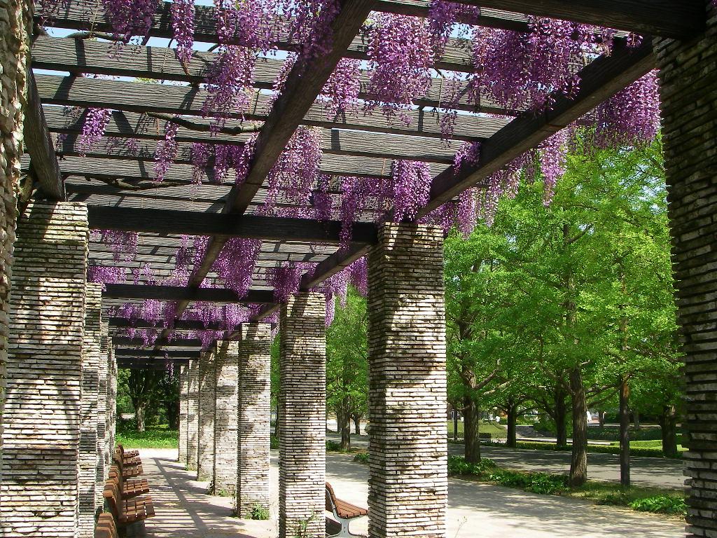 5月の記念公園_b0172896_1134236.jpg