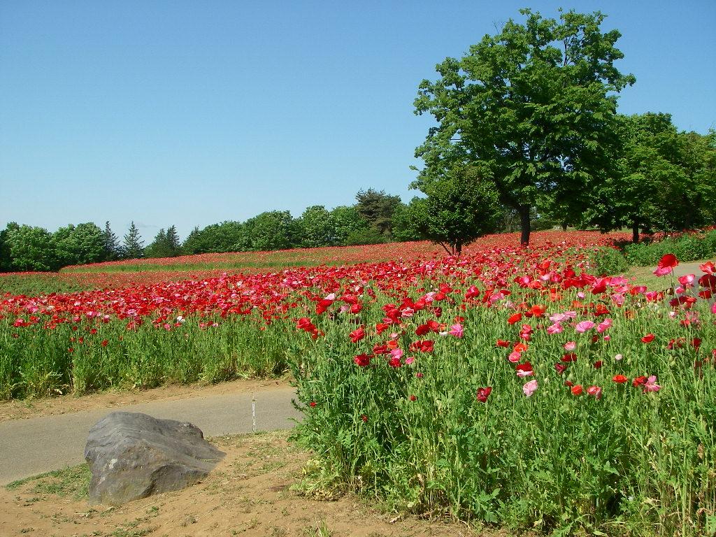 5月の記念公園 その2_b0172896_1161719.jpg