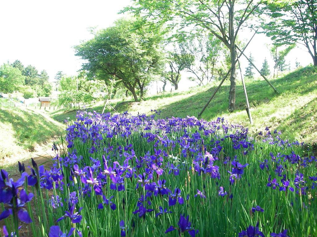 5月の記念公園 その2_b0172896_1163629.jpg