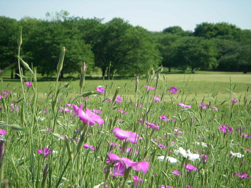 5月の記念公園 その2_b0172896_1172417.jpg