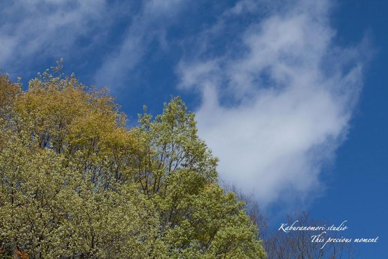 山麓の若葉、八重桜や梅、野草の花に光降り注ぐ_c0137403_215482.jpg