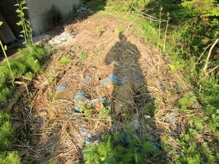 魚沼の自然_a0128408_18153689.jpg