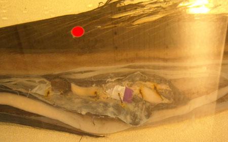葦舟みたま号、海の博物館へ_b0076008_111919100.jpg