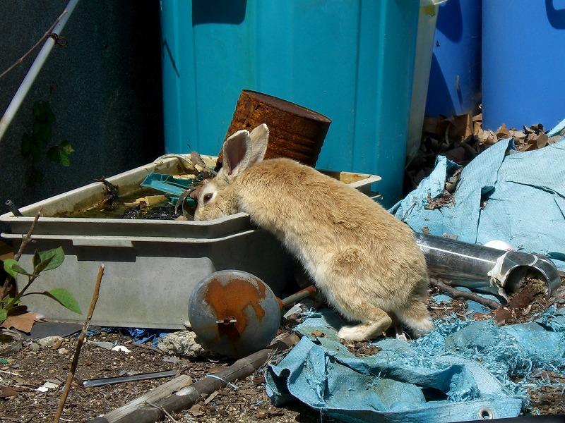 瀬戸内海に浮かぶ毒ガス工場跡とウサギの島―大久野島―_d0116009_3371358.jpg