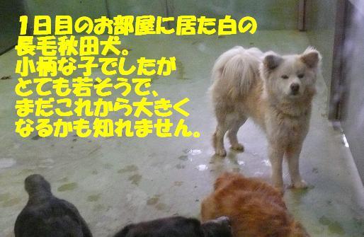 f0121712_18342410.jpg